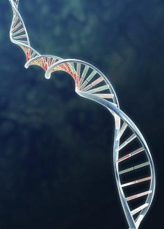 Genodieta – dowiedz się jaki masz profil DNA