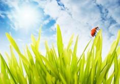 Wiosenne odchudzanie – podejmij wyzwanie!